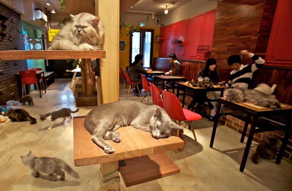 Japanese cuddle cafe