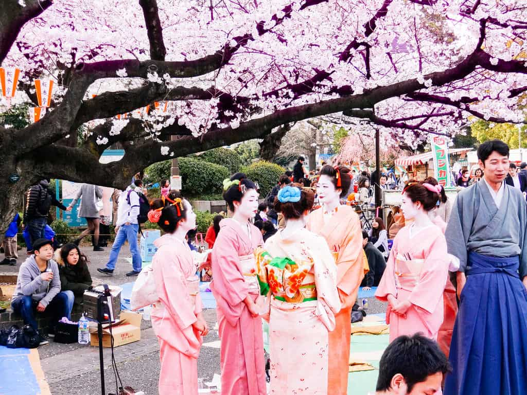 how to say cherry blossom festival in japanese