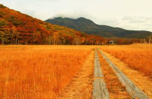 Oze National Park in Autumn