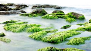 Seaweed Japanese Skincare Secret