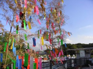 Bamboo Wishes for Tanabata