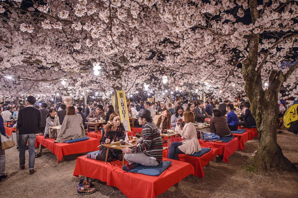 japanese cherry blossom meaning