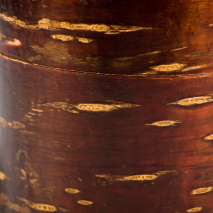 Small Cherry Bark Japanese Tea Caddy detail