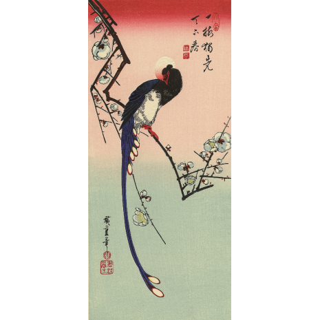 White Plum Blossom and Paradise Flycatcher Print